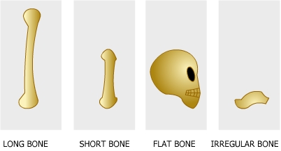 Learn about 'Dem Bones