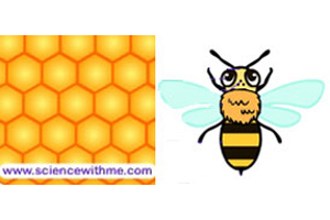 Learn about the Honey Bee