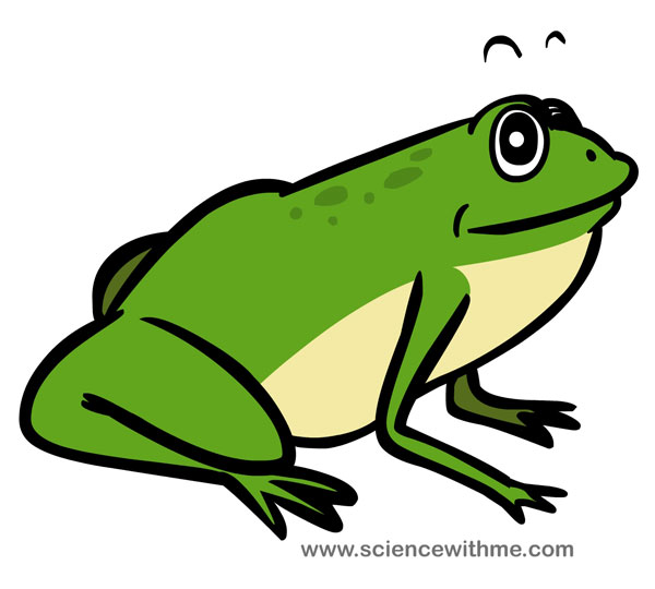 a frog needs to make sure it stays nice and moist if water is not available either as an in ground source or through dew frogs will bury themselves in - Images Of Frogs