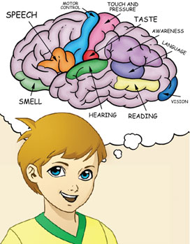 Higher brain functions definition