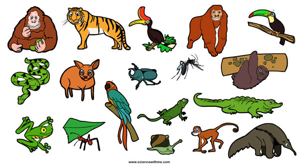 rainforest_animals1