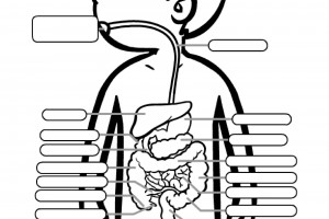 Color & Label the Digestive System Worksheet for Kids